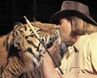 Zirkus Weisheit mit Tigern