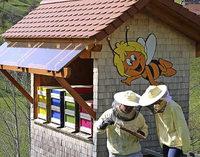 Wie bleiben Bienen vital?