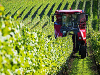 Deutsche Winzer d�rfen k�nftig mehr Reben pflanzen