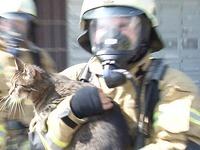 Feuerwehr rettet nach Brand Katze aus dem Hochhaus