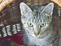 Tierdrama in Freiburg: 53 Katzen auf 45 Quadratmetern