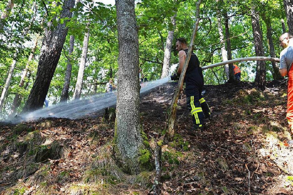 Die Freiwillige Feuerwehr Bad Säckingen musste einen Waldbrand zwischen Obersäckingen und Harpolingen löschen. (Foto: Felix Held)