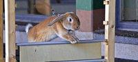 """""""Auch ein Kaninchen soll Spa� haben d�rfen"""""""