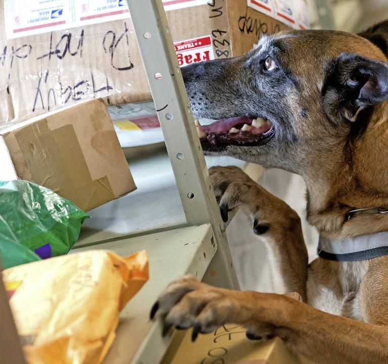 Leider gibt es noch keinen Hund, der h...nd ist spezialisiert auf Drogenfunde.   | Foto: Sven HOppe/dpa
