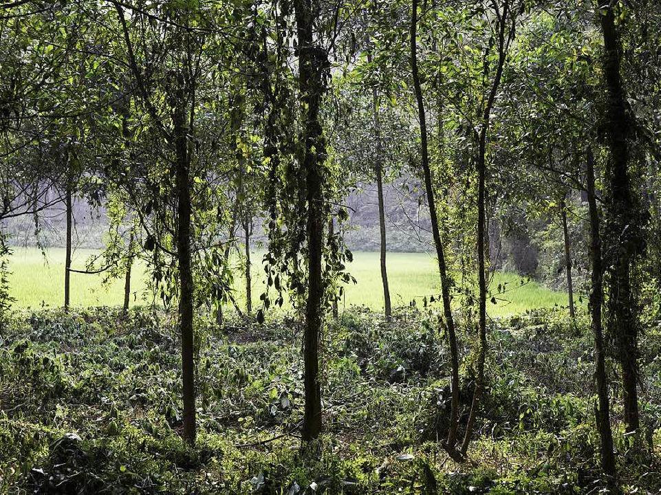 Heute: Im einstigen Kriegsgebiet wachsen wieder Bäume  | Foto: Martin Egbert