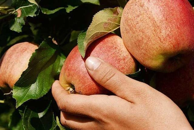 Kann man mit Äpfeln Raucher entwöhnen?