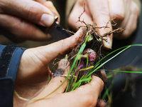 Mit pflanzlicher Notnahrung im Wald �berleben