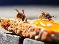 Apiphobie – die Angst vor schwirrenden Insekten