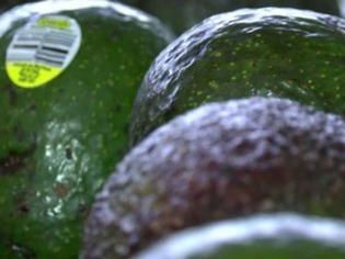 Wie Sp�rhunde und Drohnen Avocado-B�ume retten sollen