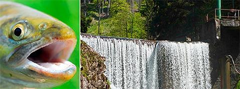 Wutachschlucht: Wasserkraftwerk in der Kritik