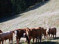 D�rre: Schwarzwaldbauern geht das Futter aus