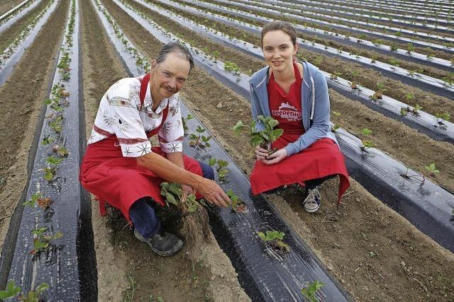 Spenglerhof in Dundenheim: Von Hühnern über Tabak zu den Beeren