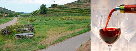 Umweltsch�tzer wollen Strau�e am Kaiserstuhl stoppen