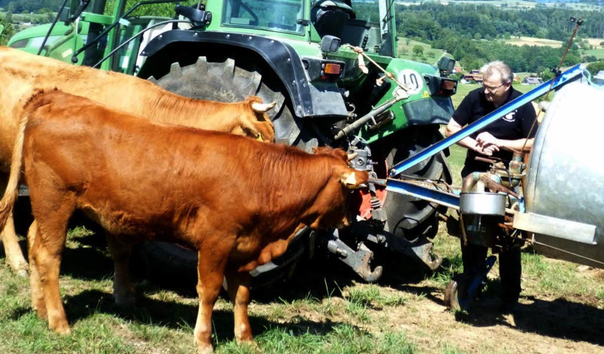 Hansjörg Matt bringt den Kühen auf der Weide Wasser zum Trinken.  | Foto: Gabriele Rasenberger