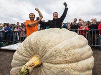 K�rbis wiegt 812,5 Kilogramm – neuer deutscher Rekord
