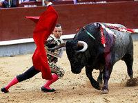Mallorca will ein Stierkampfverbot einf�hren