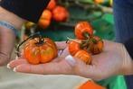 Fotos: Herbstfest mit K�rbismarkt in L�rrach