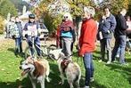 Fotos: Schlittenhundefestival in Todtmoos