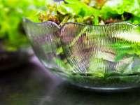 Salat ist mehr: Man muss ihn nur richtig zubereiten
