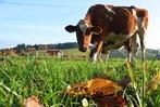 Fotos: Herbst im Freiburger Umland