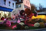 Fotos: Drittes Chrysanthemenwochenende