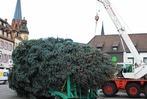 Weihnachtsbaum steht auf dem Emmendinger Marktplatz