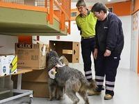Rettungshunde proben  in Schule in Bad S�ckingen