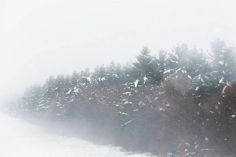 Gespenstisch: der Schauinsland im Spätherbst. (Foto: Carlotta Huber)