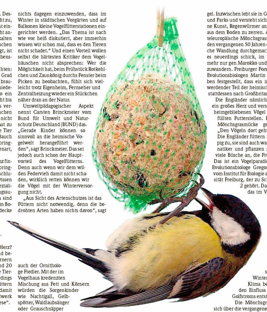 panorama ornithologe im interview soll man v gel im winter f ttern badische. Black Bedroom Furniture Sets. Home Design Ideas