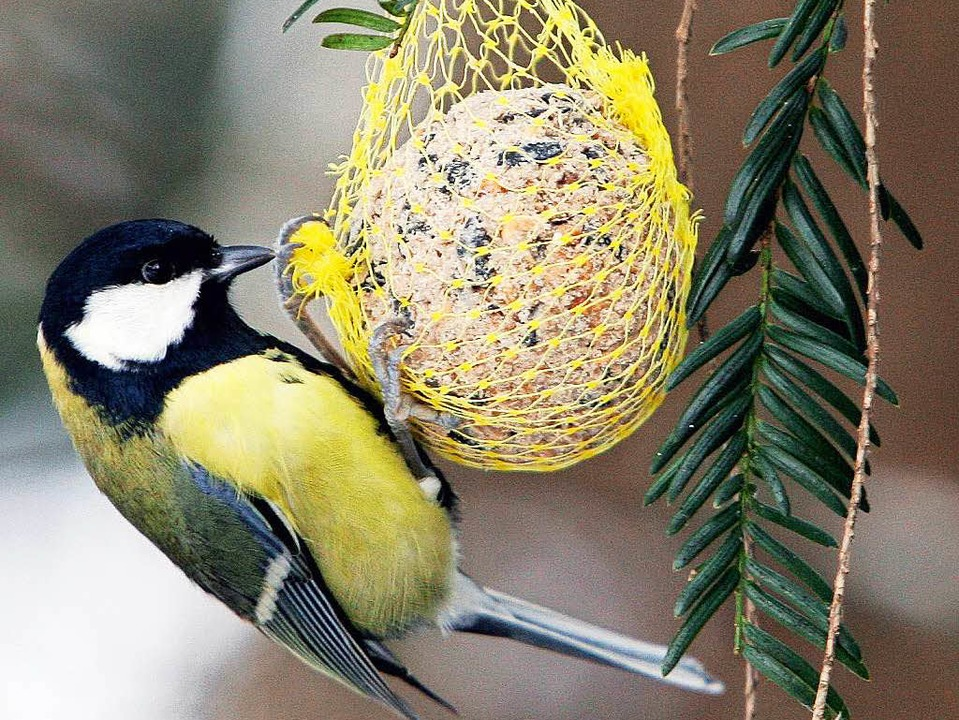 ornithologe zur frage soll man v gel im winter f ttern panorama badische zeitung. Black Bedroom Furniture Sets. Home Design Ideas