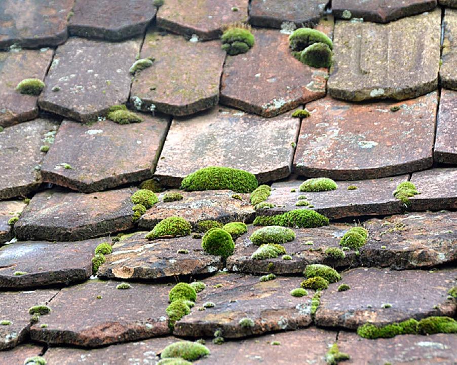 Das Dach und die Außenbalken weisen  S...en Bau des Gebäudes auf das Jahr 1728.  | Foto: Max Schuler