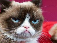 Grumpy Cat: Ein übellauniger Internet-Star