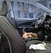 W�rme auf dem Autositz