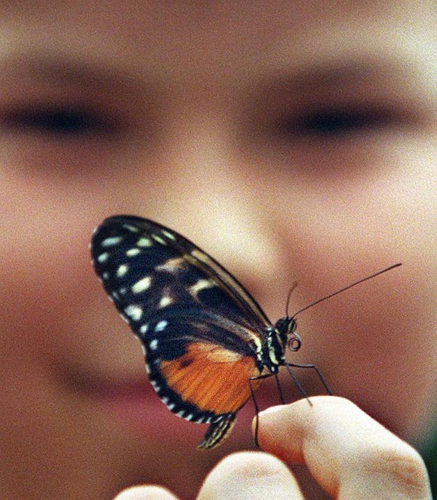 So verletzlich wie der Flügel eines Sc...ngs ist die Haut von Menschen mit EB.   | Foto: dpa