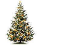 So bleibt der Weihnachtsbaum lange sch�n