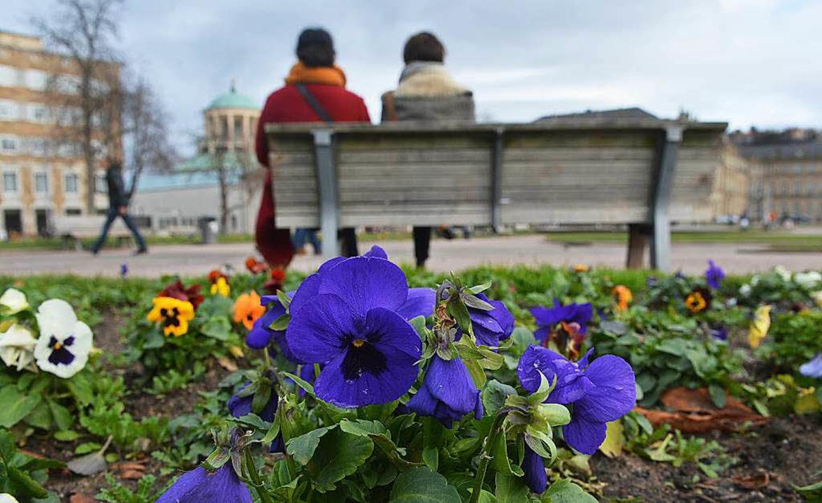 Stiefmütterchen blühen Anfang Januar auf dem Schloßplatz in Stuttgart.  | Foto: dpa