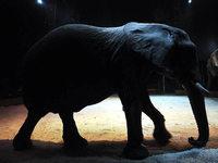 """""""Elefanten im Zirkus sind zu Recht hochgradig umstritten"""""""