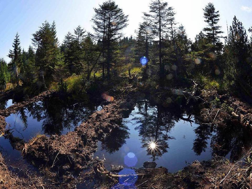 So sieht es aus, wenn ein Moor vernäss...an der sächsisch-tschechischen Grenze.    Foto: dpa