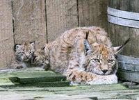 Zoo d'Amn�ville- Frankreich