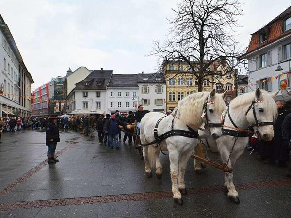 Bei idealem Wetter wurde am Samstag der Narrenbaum auf den Alten Marktplatz gestellt.