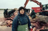 In Nordstrand werden zwei gestrandeten Pottwale zerlegt