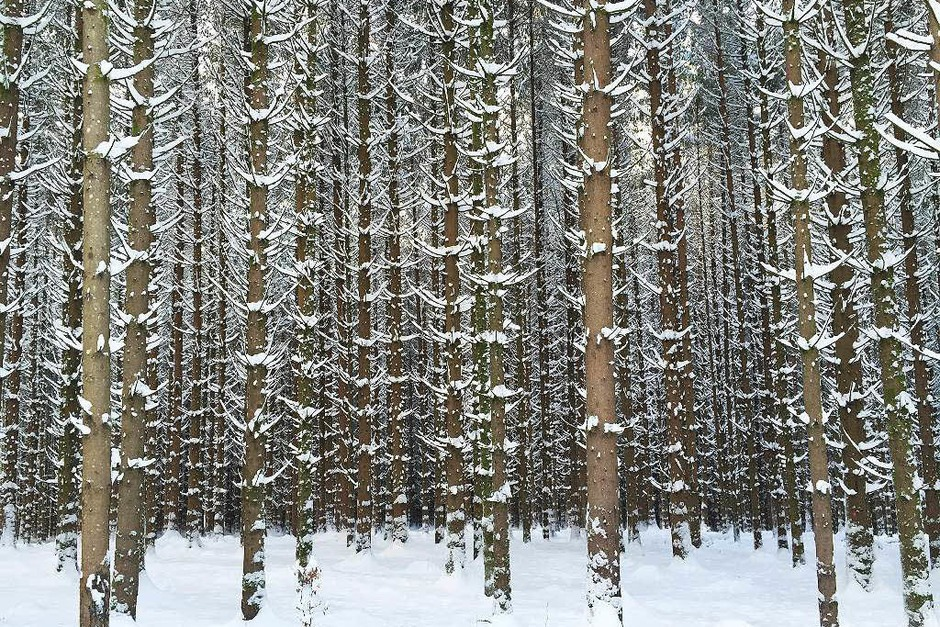Der Winter hielt seit dem Wochenende Einzug im gesamten Elz- und Simonswäldertal. (Foto: Anna-Lena Landwehr)
