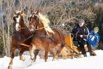Fotos: Pferdeschlittenrennen in St. Märgen