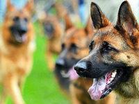 Hund bei�t zu – Herbolzheimer k�mpft mit den Folgen