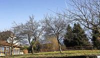 Gerangel um Bauland und Parkpl�tze: Wird der Pfarrgarten bebaut?