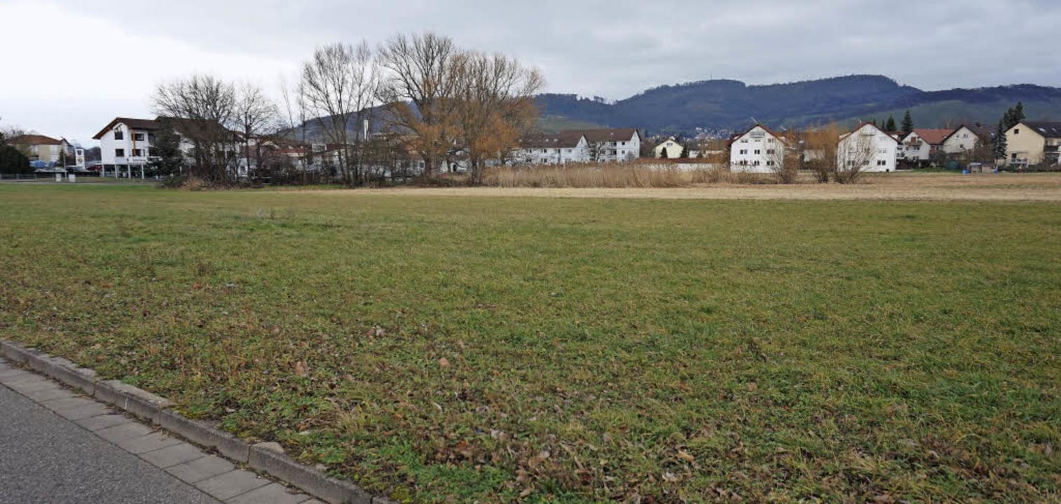Aus dieser Wiese soll das Wohngebiet &...n,  dahinter liegt ein Gewerbegebiet.   | Foto: Steckmeister