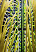Hochschwarzwald will schnell ins Netz