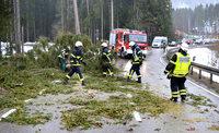 Sturmtief Ruzica fegt �ber den Hochschwarzwald - Narrenb�ume vorzeitig gef�llt