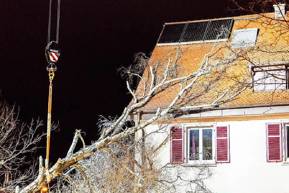 Sturmschäden im Stühlinger (Foto: Carlotta Huber)