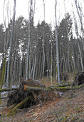 """""""Sturm reinigt den Wald"""""""